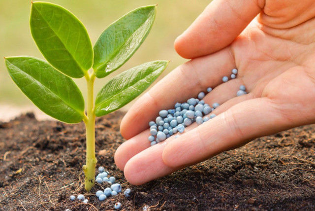 Ochrana rastlín